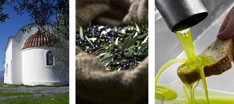 Bilder Olivenplantage - Herstellung Olivenöl